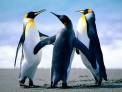 Penguinss